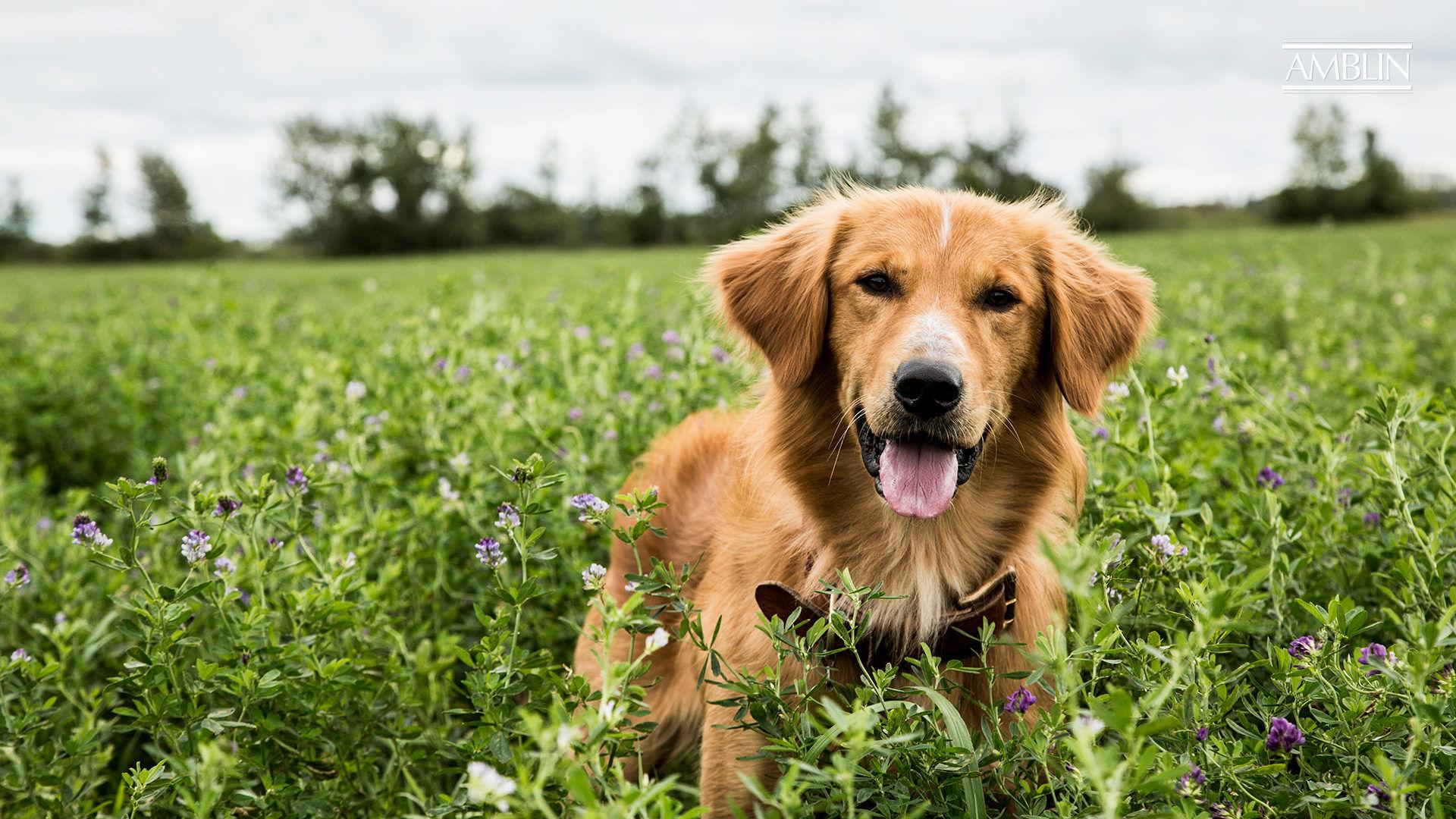 Amblin Partners Begins Principal Photography On A Dog S Journey Amblin Press